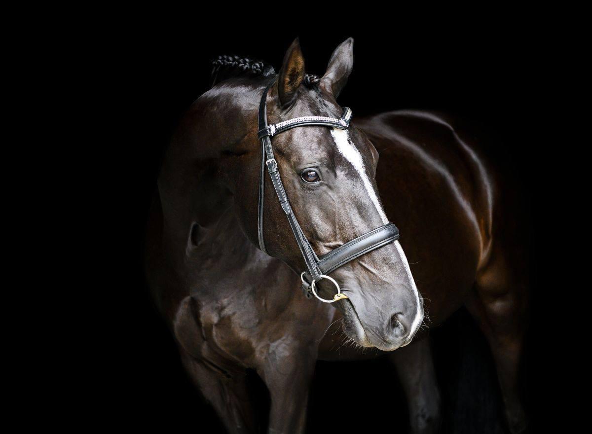 Home Serata Equine Photography Sarah Mounsey
